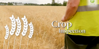 The road to Irish Certified Seed - Crop Inspections