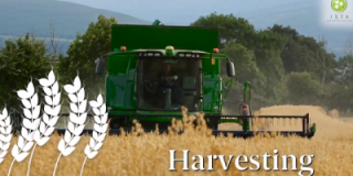 The road to Irish Certified Seed - Harvesting